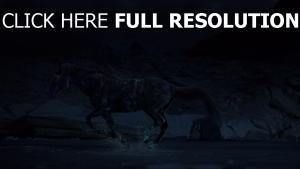 cheval multicolore courir nuit