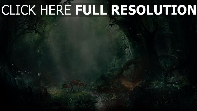fond d'écran hd forêt cerf rayon ruisseau