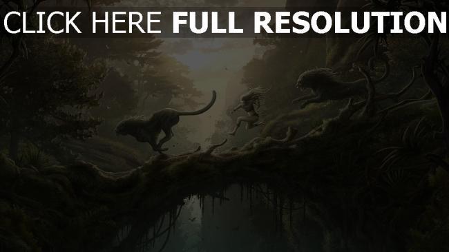 fond d'écran hd panthère forêt tropicale soirée