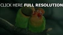 oiseau d'amour baiser branche