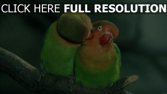 Fond D Ecran Hd Oiseau D Amour Baiser Branche Images Et Photos