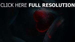 cœur givre composition