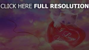 chat aile ciel ballon inscription