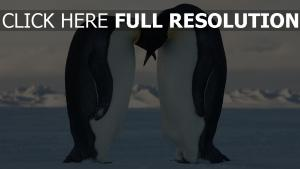 pingouin arctique couple