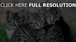 chat museau équipe regard
