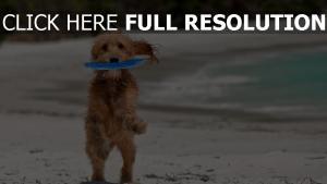 chien côte tropical humide