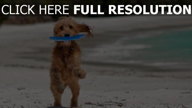 fond d'écran hd chien côte tropical humide