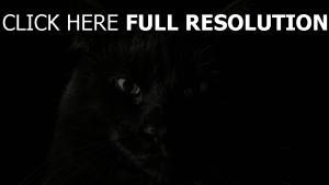 chat noir regard gros plan
