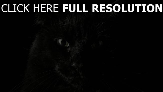 fond d'écran hd chat noir regard gros plan