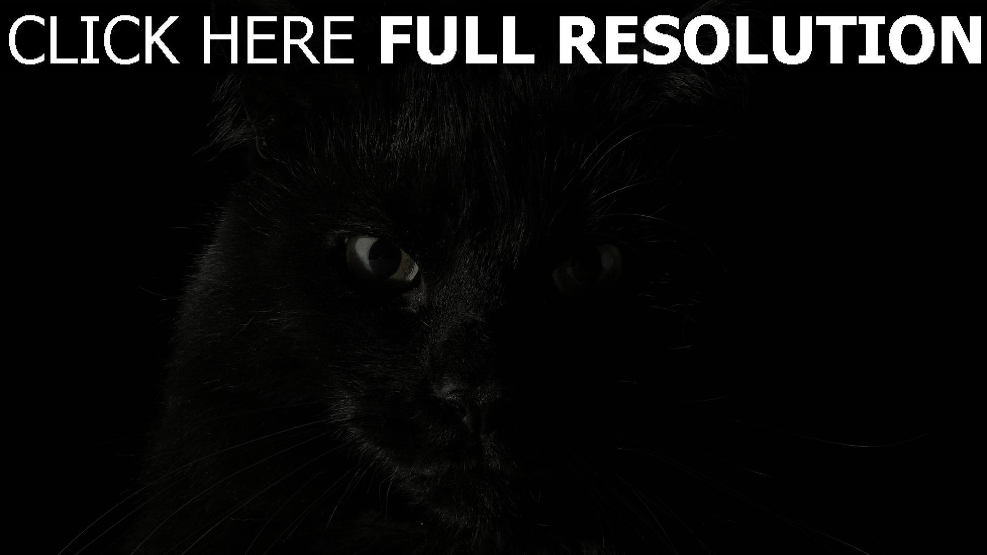 fond d'écran 1920x1080 chat noir regard gros plan