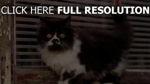 museau chat duveteux noir et blanc