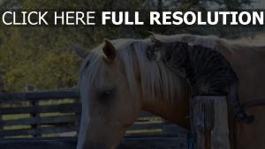 chat cheval couple arrière-plan flou