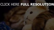 chat flou jouet étreinte