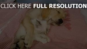 chat chien amis étreinte couverture