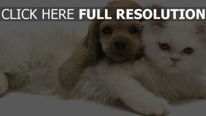 chat chien duveteux amis