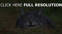 chat flou grimace vue de face