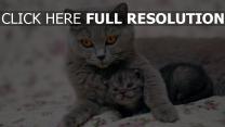 chat regard chaton étreinte