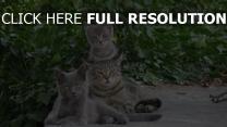 chat amusant troupeau