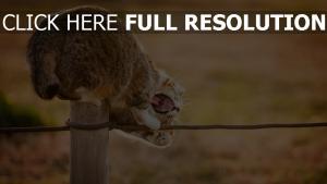 chat furieux bouche