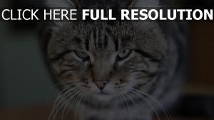 chat museau regard soupçonneux