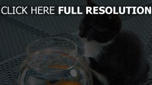 chat pêcheur aquarium