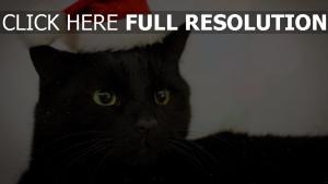 chat chapeau museau hiver gros plan