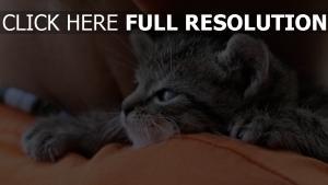 chaton museau mignon