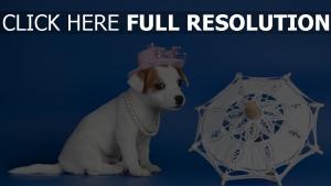 aristocrate chien parapluie