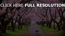chat noir sakura route