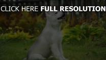 husky chiot mignon attentif