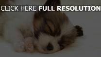 chiot dormir mignon yeux fermés