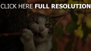 chat arbre grimace amusant