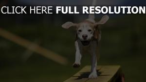 chien sourire amusant flou