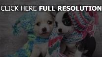 chiot chapeau couple mignon