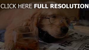 chien dormir thé lunettes