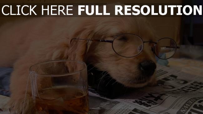fond d'écran hd chien dormir thé lunettes