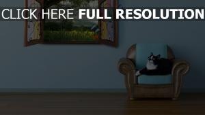 chat fenêtre fauteuil papillon
