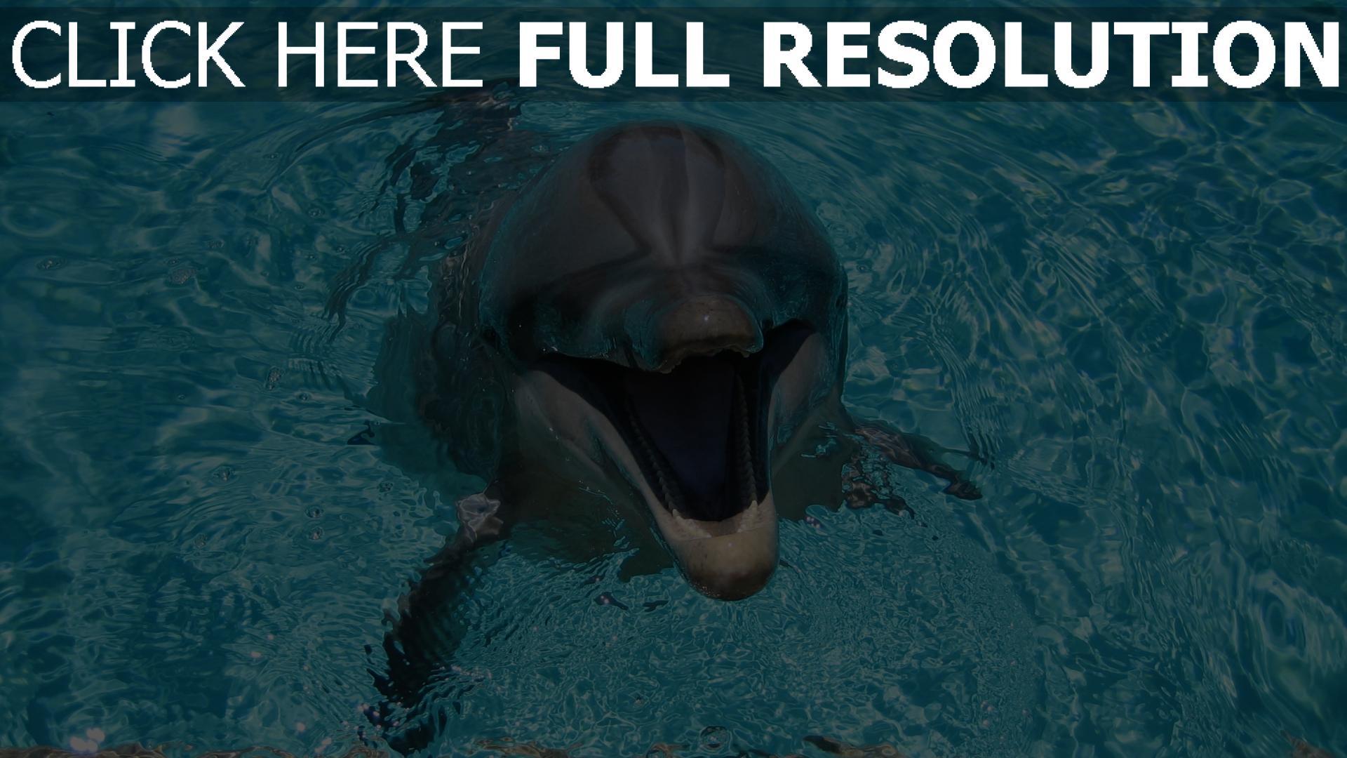 fond d'écran 1920x1080 dauphin museau gros plan mignon