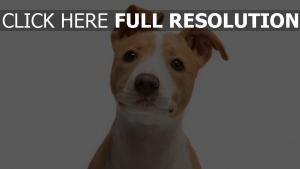 chien museau attentif vue de face
