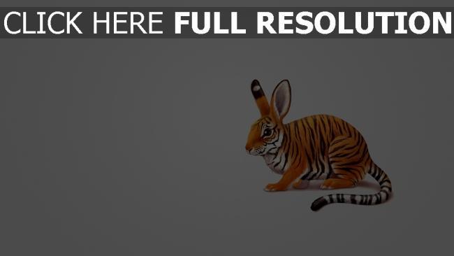 fond d'écran hd hybride tigre lapin amusant