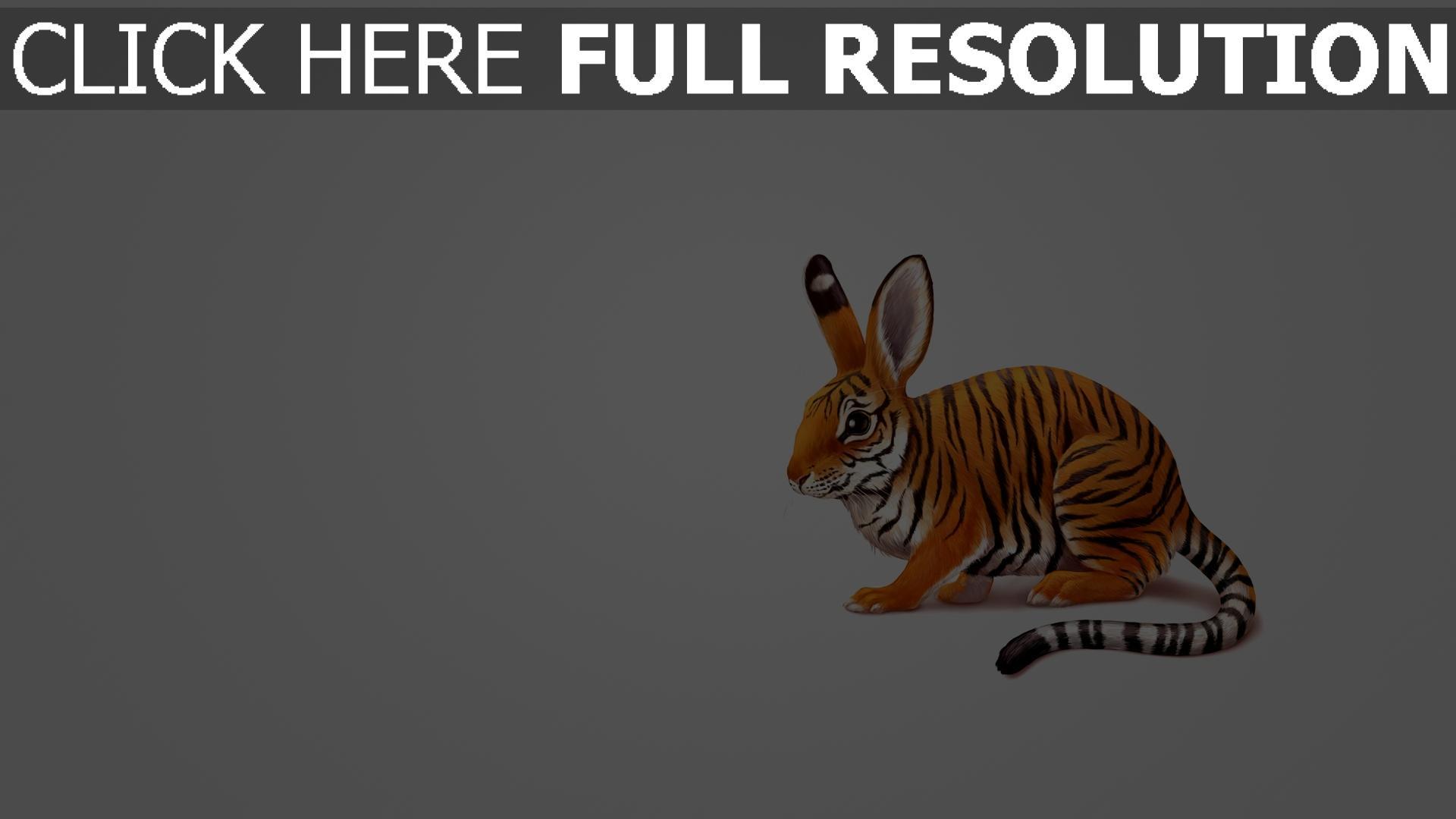 fond d'écran 1920x1080 hybride tigre lapin amusant