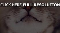 chat heureux museau gros plan