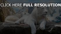 lion blanc montagne enneigé