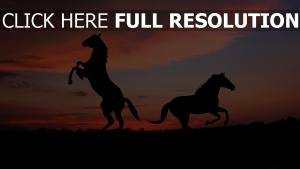 cheval soirée silhouette horizon