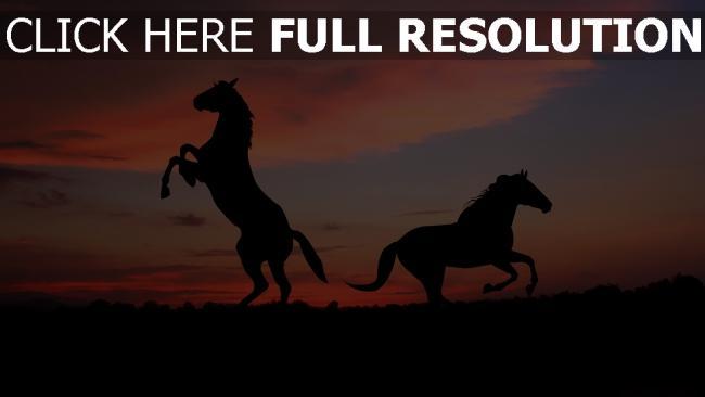 fond d'écran hd cheval soirée silhouette horizon