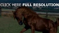cheval crinière muscle vue de côté