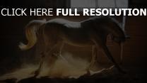 cheval blanc crinière vue de côté