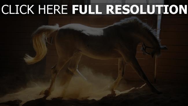 fond d'écran hd cheval blanc crinière vue de côté