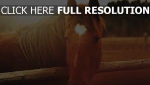 cheval museau gros plan crinière