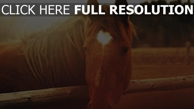 fond d'écran hd cheval museau gros plan crinière